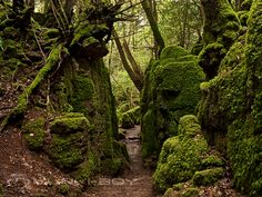 Puzzle Woods | Forest of Dean | Gloucestershire | England | Places ...