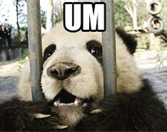 Panda D'awwww - LOL-worthy gifs of funny animals doing funny things Animals And Pets, Baby Animals, Funny Animals, Cute Animals, Niedlicher Panda, Cute Panda, Happy Panda, Panda Funny, Beautiful Creatures
