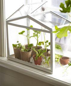 Window Seal Greenhouse