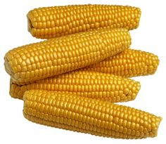 Growing corn - Plant seeds 1 inch deep and 4 to 6 inches apart in rows 30 to 36 inches apart. Plant in blocks of at least 4 rows. Yellow Maize, Yellow Corn, Mellow Yellow, Corn Maize, Corn Health Benefits, Corn Vegetable, Vegetable Gardening, Gardening Tips, Feed Corn
