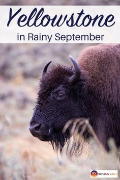 There might be rain. There might be snow. But there definitely will be lots of beautiful wildlife and gorgeous vistas. Misty geysers stunning waterfalls and lots of fun. Find out how to really enjoy this gorgeous national park in September. Usa Travel, Travel Tips, Travel Advice, Travel Photos, Travel Destinations, American Attractions, Get Outdoors, United States Travel, Day Trips
