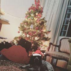 Marvin comemorando seu 6o aninho .... #elefazaniversario #Materniarte #Natal #HoHoHoHo #xtmas #Marvin #cockerspaniel
