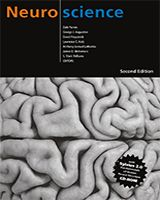 Neuroscience, 2nd edition, by Dale Purves, , George J Augustine, David Fitzpatrick, Lawrence C Katz, Anthony-Samuel LaMantia, James O McNamara, and S Mark Williams. Publicly available online through the NIH NCBI (PubMed) Bookshelf. Neuroscientist-recommended.