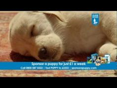 Sponsor a Guide Dog puppy - Dave and Quince TV advert.