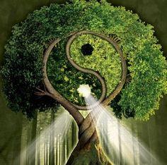 Yin/Yang tree, stylized version would make a cool tattoo