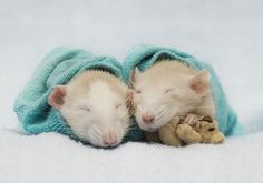 Sleeping in their blankie with their teddy - DesignTAXI.com