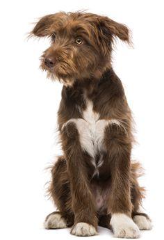 puppy housetraining principles