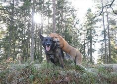 Tinni & Sniffer  Tinni and Sniffer are an unlikely pair. The dog and fox combo have fun playing in the woods in their native Norway.