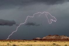 T-Rex Lightning Bolt is New Coolest Picture Ever