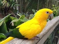 Decor Bibi Villela. Amazonia Natureza.