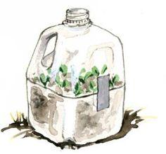 milk jug hot house...start seeds