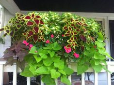 Window boxes for shade. Came out beautiful this year! Coleus, potato vines and impatiens =)My Window boxes for shade. Came out beautiful this year! Coleus, potato vines and impatiens =) Window Box Plants, Window Box Flowers, Window Planter Boxes, Shade Flowers, Shade Plants, Flower Boxes, Container Flowers, Flower Planters, Container Plants