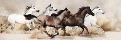 Trendykunst presenteert dit prachtige glasschilderij van paarden.  Zwart/wit , directe print van afbeelding op glas.