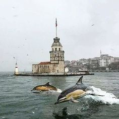 Dolphins by Olay Seven on of Istanbul / Bosphorus Mein Land, Istanbul Travel, Weekend Fun, Olay, Ottoman Empire, Antalya, Dolphins, Statue Of Liberty, Whale