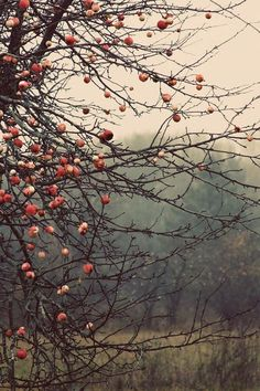 fallingforoctoberandecember: Autumn Hollow on tumblr