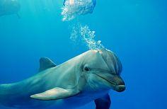 Forever Dolphin love