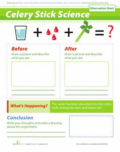 First Grade Science Worksheets: Celery Experiment First Grade Science, Primary Science, Preschool Science, Physical Science, Teaching Science, Science Activities, Science Projects, Science Experiments, Science Fun