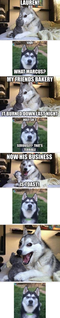 Funny pictures about Pun Husky Is At It Again. Oh, and cool pics about Pun Husky Is At It Again. Also, Pun Husky Is At It Again photos. Husky Humor, Husky Funny, Pun Husky, Husky Jokes, Funny Dog Jokes, Puns Jokes, Dog Quotes Funny, Funny Jokes To Tell, Good Jokes