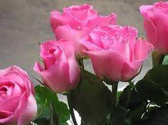 Resultado de imagem para rosas lindas