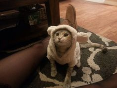 My wife bought my kitten a bear suit and she loves it...