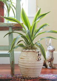 Most Popular Houseplants   Costa Farms Types Of Houseplants, Easy To Grow Houseplants, Garden Plants, Indoor Plants, House Plants, Madagascar Dragon Tree, Moth Orchid, Low Light Plants, Inside Plants