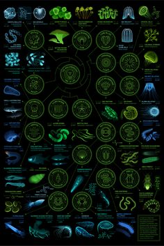 A visual compendium of glowing creatures : a year-long infographic design project between biology and design Sistema Solar, Life Science, Science And Nature, Science Pics, Science Art, Science Illustration, Web Design, Graphic Design, Marine Biology