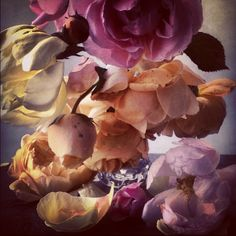 Nick Knight @showstudio_nick_knight Roses from my gar...Instagram photo | Websta (Webstagram)