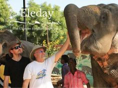 India Travel Features India Attractions - Enjoy a Day With The Elephants in Jaipur, India - See more @gr8traveltips #India #IndiaTravel #Jaipur #Elephants