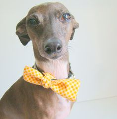 Plaid Dog Bow Tie by TheBluestSky on Etsy, $12.00