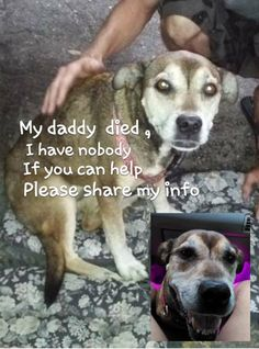 Very sad story you need to read , share and help asap I don't have a name, I just have a number A666544 I belonged to a homeless man in Titusville. He recently passed away, I have no relatives or anyone to go to. I was found walking in the pouring rain by a random person. They bought me food, and water and took me home and gave me a place to stay. They have two dogs already or they would have kept me. I am a 4 year old female Labrador retriever mix. If I am not adopted, the shelter I was…