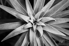 Week 22 - Black and White http://www.pattondesignphotography.com
