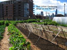 Top 40 Urban Gardening Blogs and Websites for Urban Gardeners