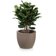 Der Pflanzkübel TARRO 43 aus Kunststoff bietet auch größeren Pflanzen mit ausladendem Wurzelwerk genügend Platz. Der Blumenkübel in der Farbe Cappuccino macht mit seinem schlichten, reduzierten Design bei der Gestaltung von Innenräumen wie beispielsweise Büros oder Foyers eine gute Figur. Aber auch dem Einsatz in Gärten, Grünanlagen oder auf der Terrasse steht nichts im Wege. Dank seiner leicht angerauten Oberfläche wirkt der Blumenkübel zudem sehr natürlich.