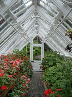 Glasshouse in my dreams!
