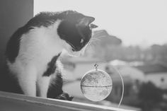 Kitten traveler by Sara on Kitten, World, Photography, Travel, Globe, Etsy, Kittens, The World, Kitty