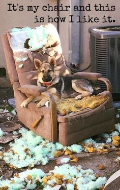 When you buy a chair for your dog and it just isn't quite to their aesthetic taste...