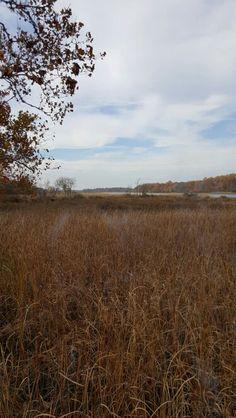 Boundary Creek Natural Resource Park - Moorestown, Nj.
