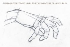 https://www.facebook.com/Stefano-Lanza-Study-of-structure-of-human-body-1479159998770051/  #anatomy #hand #hands #drawing #draw #pencil