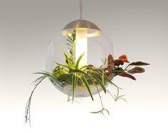 Babylone lampe fra Greenworks. En unik smuk plantelampe som er til dig som gerne vil optimere og gøre dit kontormiljø mere grønt, innovativt og inspirerende.