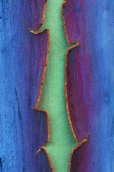 split bark