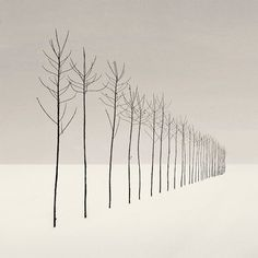 Nilgün Kara--nice change of pace for perspective drawings Illustration Art, Illustrations, Perspective Drawing, Point Perspective, Minimalist Photography, Art Plastique, Teaching Art, Tree Art, Black And White Photography