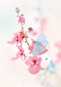 """""""A alma é uma borboleta. Há um instante em que uma voz nos diz que chegou o momento de uma grande metamorfose."""" [Rubem Alves]"""