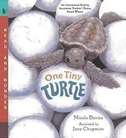 Main Idea  Nonfiction.  Adorable book, we use it in 2nd grade.  Every child around the beach should hear/read this.