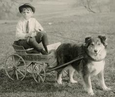 Collie and cart pulling boy.