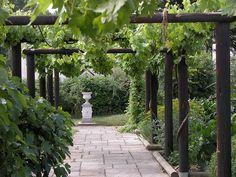 Grape vine walk-way