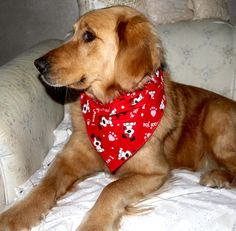 War dogs, Dog bandana and Bandanas
