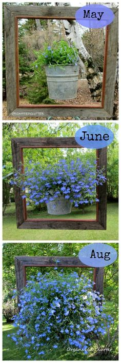 A Framed Lobelia... Like the framed hanging basket idea. Use the old metal watering can and spray paint the frame either turquoise or purple