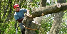 Johns Creek Professional Tree Services