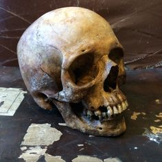 Human Skull 150 years old, apparently it has a nice patina.