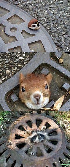 可愛いとしか言いようがない。マンホールと動物の組み合わせは最強。